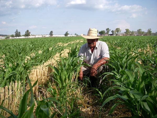 Cuarta transformación en agro significa aumentar productividad y disminuir  la contaminación – Imagen Agropecuaria